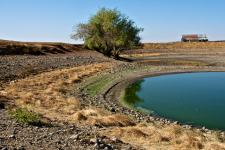 Cattle Stock Pond in Reserve