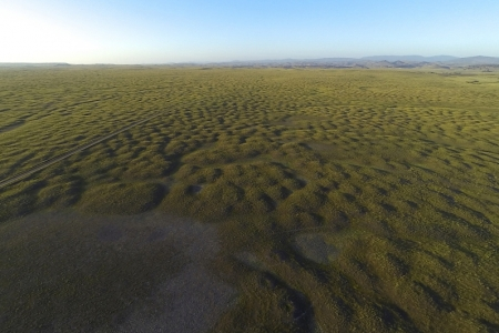 Mima mounds in northern part of Reserve. Photo by David Rosen.
